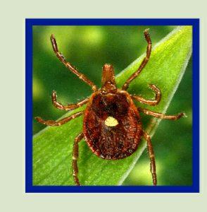 16_265813_green_background_ticks_web_crop